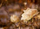Mariage Nature chic en Or et Blanc